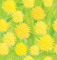 seamless pattern of yellow dandelions vector image
