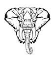 sketch design head elephant vector image vector image