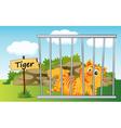 Tiger Zoo vector image vector image