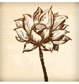 aquatic plant lily ornamental flower card vector image