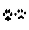 caucasian cat footprint vector image vector image