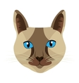 colorful cat front view graphic vector image vector image