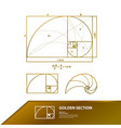 golden ratio for creative design section vector image vector image