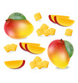 mango fruit slices set realistic detailed vector image vector image
