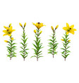 yellow lilies with leaves realistic flowers vector image vector image