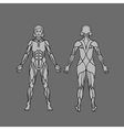 Anatomy of female muscular system exercise and vector image vector image
