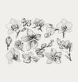 big set monochrome vintage flowers vector image vector image