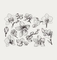 big set of monochrome vintage flowers vector image vector image