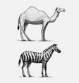 camel and zebra hand drawn engraved wild animals vector image vector image