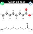 Caprylic acid molecule vector image vector image