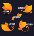 collection bright autumn leaves on dark vector image