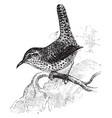 rock wren vintage vector image vector image