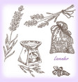 plant lavender in sketch style vector image