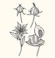botany set vintage flowers vector image