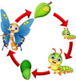 butterfly life cycle vector image vector image