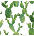 cactus tropical summer botanical background vector image vector image