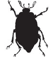 chafer vector image vector image