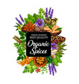 organic spice icon with herbs and plants or seeds vector image