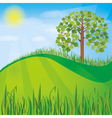 Summer or spring nature background with green tree vector image vector image