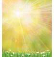 sun grass background vector image