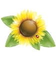 Beautiful sunflower and green leaves isolated vector image
