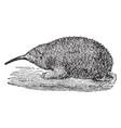 brujin echidna porcupine anteater vintage vector image vector image