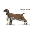 dog breed engraved hand drawn vector image