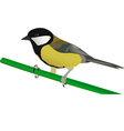 little tit perched on twig vector image vector image