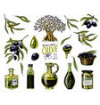 set of olive oil and branch of trees organic vector image vector image