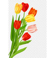 bouquet of tulips isolated vector image