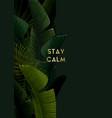 dark summer tropical design with banana palm vector image vector image