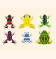 frog cartoon tropical animal cartoon amphibian vector image vector image