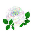 rose multicolored simple stem with leaves vector image vector image