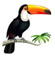 toucan with orange beak vector image vector image