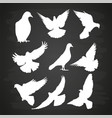 white dove silhouette set on blackboard vector image vector image