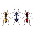ant insect set vector image