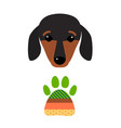 little dachshund puppy head purebred mammal sweet vector image vector image