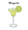margarita cocktail with lime decorations for vector image vector image