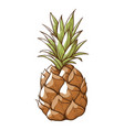pineapple fresh sweet whole fruit tasty vitamin vector image vector image