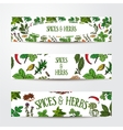Set of hand drawn banner templates with spices and vector image