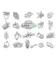 sketch superfood icons set vector image