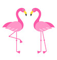 two pink flamingo birds isolated on white vector image