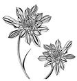 Aeonium Tree Flower vector image