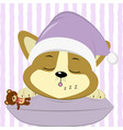 cute puppy corgi in a pink hat sleeps on a vector image vector image