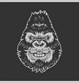 smiling gorilla head vector image