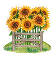 watercolor sunflower rustic country decoration vector image vector image
