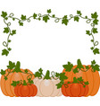 background of orange and white pumpkins vector image vector image