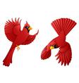 cardinal cartoon set vector image