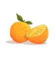 Fresh Full Garden Orange WIth Leaf And Orange vector image vector image