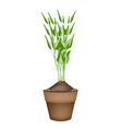 Fresh Water Spinach in Ceramic Flower Pots vector image